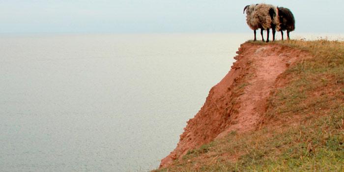 Zwei Schafe an Abhang am Meer