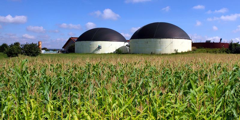 Biogas Genmais